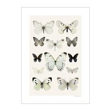 Print Butterfly Collage