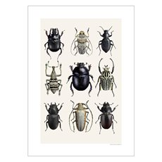 Picture Beetle Collage